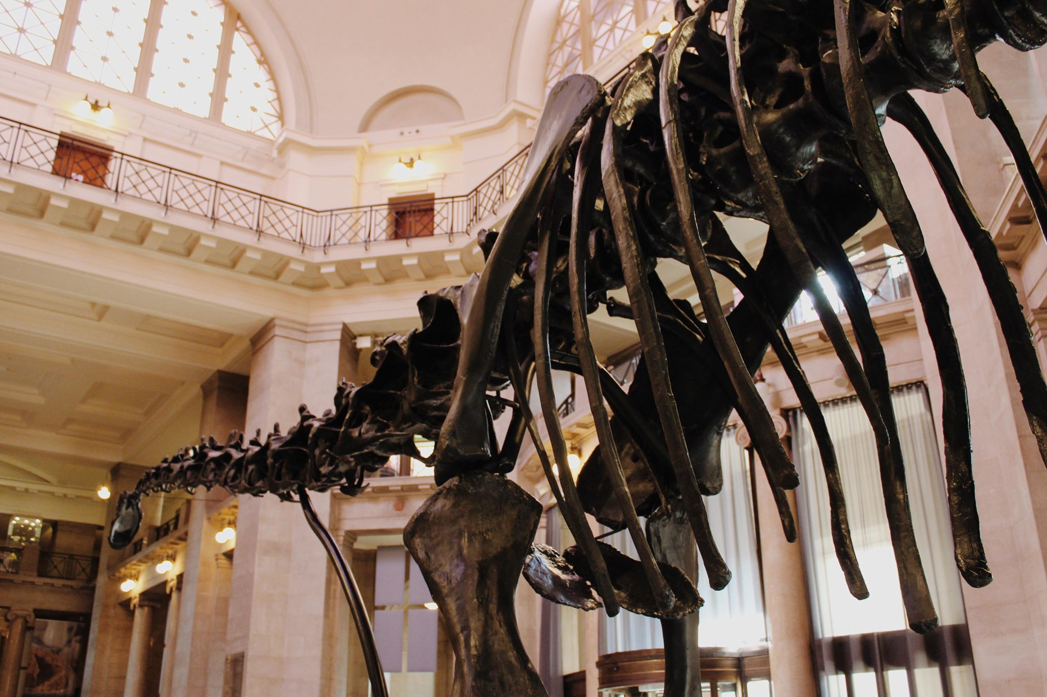 The National Museum will be home to Dippy until January 2020