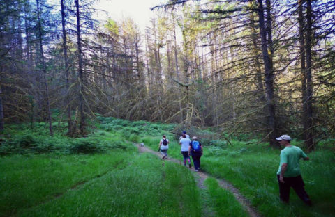 A group of people walk through the woods
