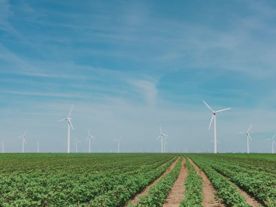countryside with windmill on a blue sky and vegetables