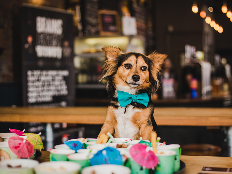 A dog with a bow sits in front of brightly coloured cocktail drinks